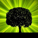 Tree with green burst template. EPS 8
