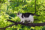 boarcat on the tree
