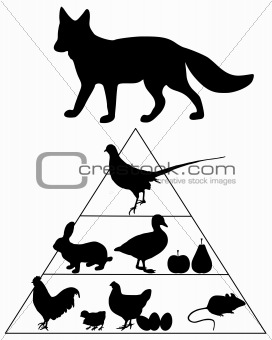 Fox food guide pyramid