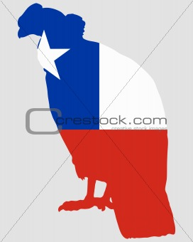 Andean Condor Chile