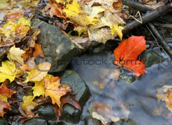 Autumn Stream Bed