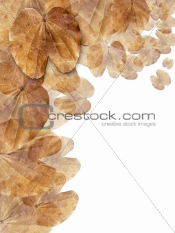 Layer of Dry brown leaf background Vertical
