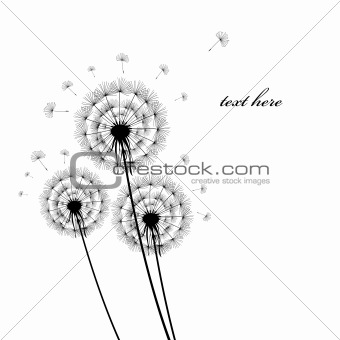 black silhouettes of dandelions