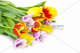 bouquet of the tulips
