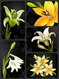 lily set, vector grunge floral background