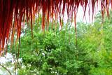 Jungle hut rain in rainforest water dropping detail