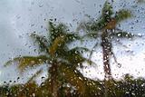 Hurricane tropical storm palm trees from inside car
