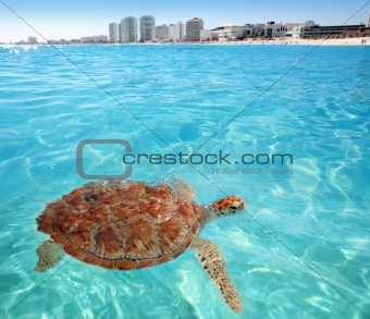 Green sea Turtle Caribbean sea surface Cancun
