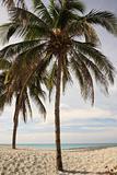 Palm Trees Varadero Beach Cuba