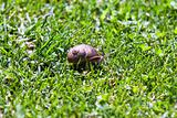 snail in green grass