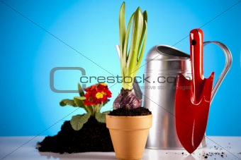 Plant and garden tool