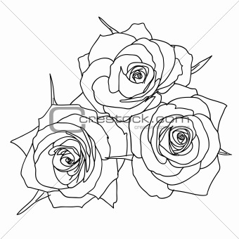Three Roses in hand drawn style