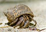 Hermit crab on the sand 