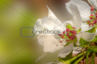 Beautiful fresh Spring flower blossom macro with excellent color