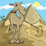 Cartoon camel in front of a pyramid