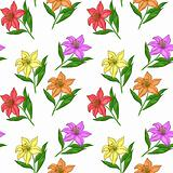 Background, flowers lily