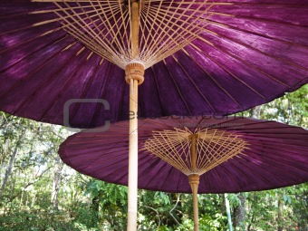 A pair of bamboo purple parasols or Umbrellas