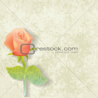 abstract floral illustration with rose