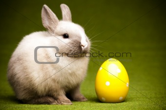 Green background and bunny