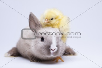Animal easter