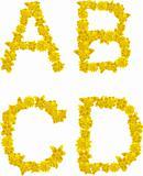 Alphabet of yellow flowers and butterflies-A, B, C, D.
