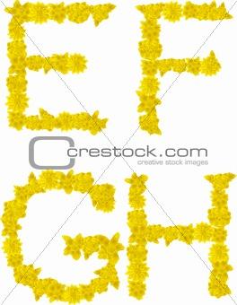 Alphabet of yellow flowers and butterflies-E, F, G, H.
