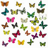 A collection of colorful butterflies