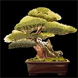 vector of the bonsai tree on a black background