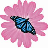 vector butterfly on a pink flower