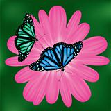 vector butterflies on a pink flower