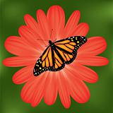 vector butterfly on a red flower
