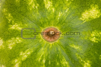 Close up - green skin of the watermelon