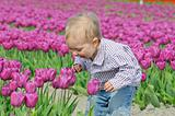 Boy In Tulip Field
