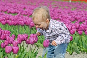 Boy In Tulip Field