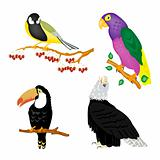 Illustration of the varied birds
