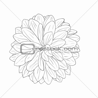 floral design element and hand-drawn , vector illustration