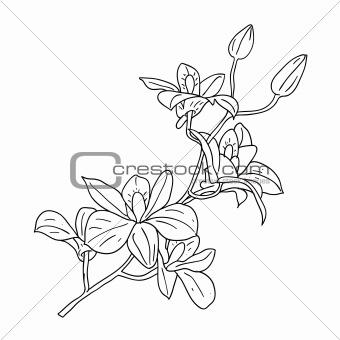 floral design element and hand-drawn , vector illustration