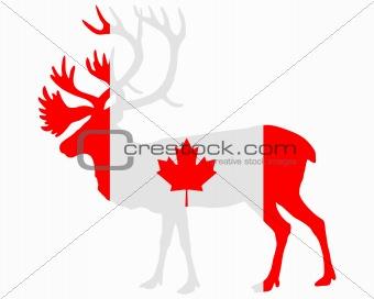 Canadian caribou