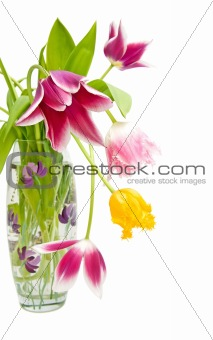 bouquet of tulips of different colors in the vase