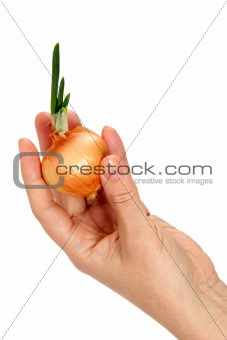 A beautiful female hand keeps onion