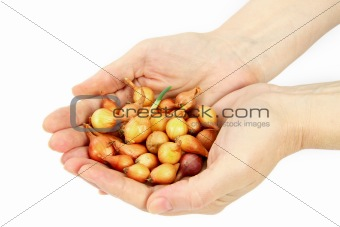 Beautiful women's hands hold the seeds of onions
