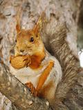 squirrel with a nut on a branch