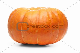 Single fresh pumpkin