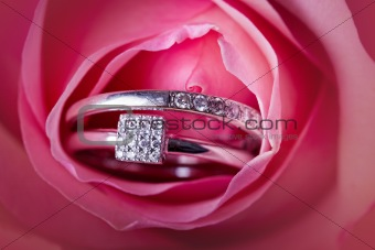Close-up of pink rose with diamond ring