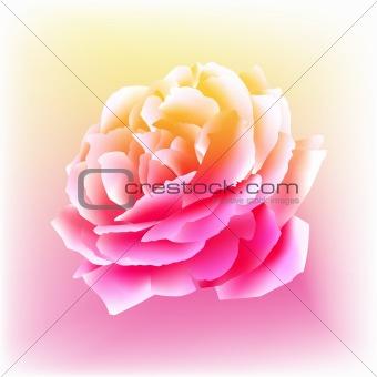 Watercolor Rose Bloom