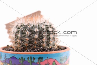Close Up Details of a Cactus