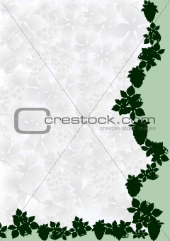 Background of grape vines