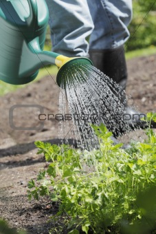 Watering