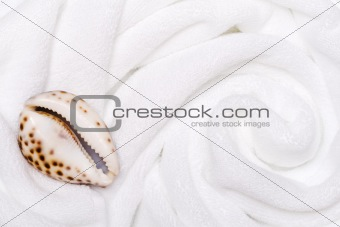 shell on white towels close up