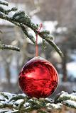 Beautiful Christmas bauble on fir tree branches